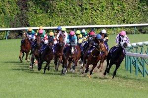 Guide to Enjoying JRA Horse Racing