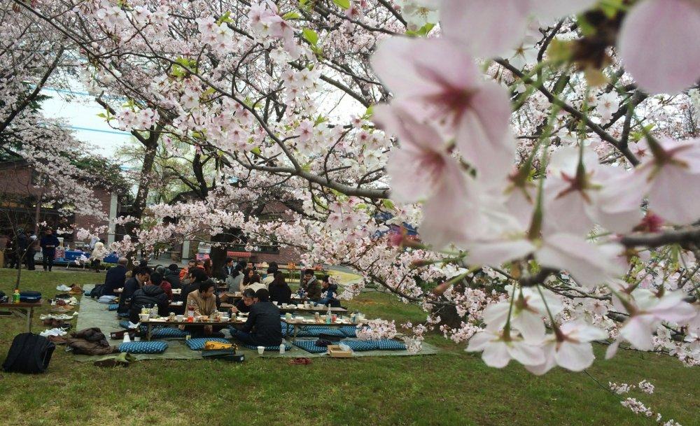 Hanami no dia 2 de abril