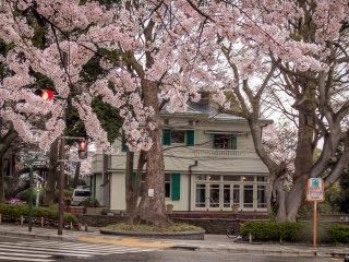 Terkenal karena memiliki banyak bangunan bergaya Eropa klasik, area ini benar-benar tampak hidup ketika musim sakura tiba