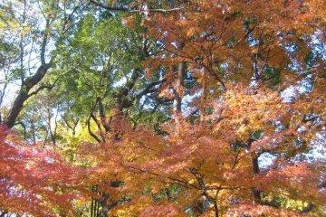 <p>Красное, золотое и зеленое: круговорот цветов в парке</p>