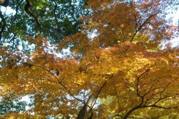 <p>Каждое дерево имеет свои собственные смеси цветов</p>