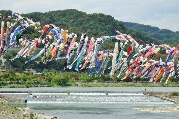 Sagamihara Carp Streamer Festival
