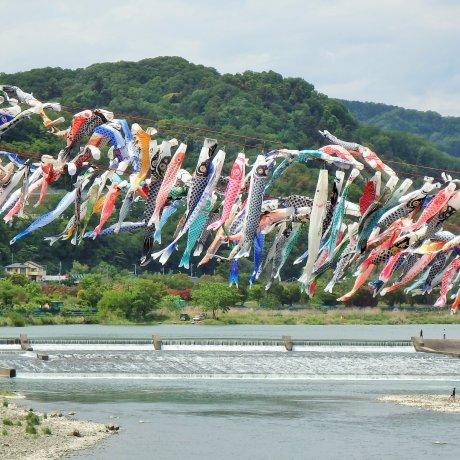 เทศกาลสายรุ้งปลาคาร์พ ณ.สะกะมิฮะระ [ยกเลิกเรียบร้อย]
