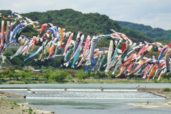 Koi-no-bori hanging over the Sagami River.