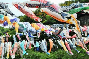 Around 1,200 carp-shaped wind socks brighten the sky.