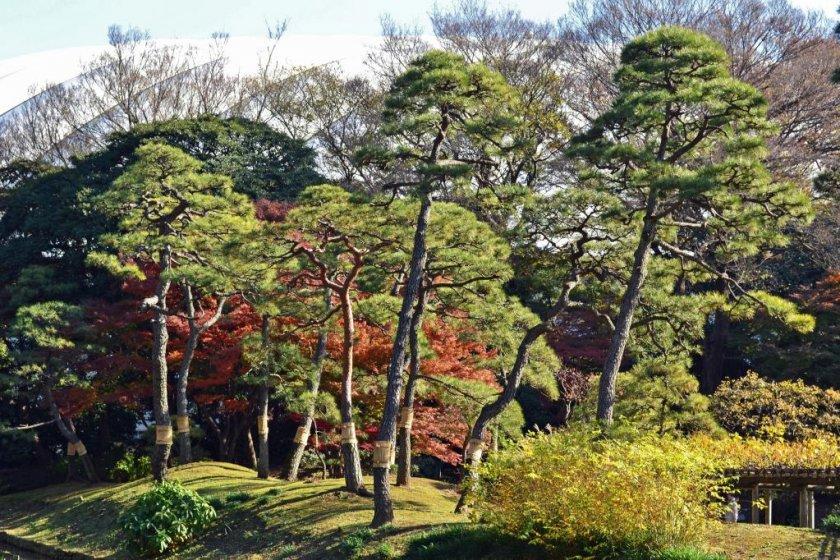 Many trees to enjoy