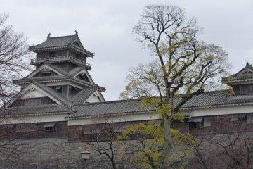 ปราสาทคุมาโมโตะ และ Saigo Takamori ซามูไรคนสุดท้าย