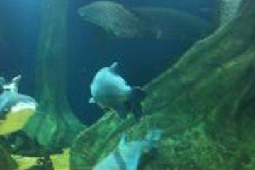 <p>水下世界</p>