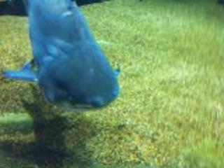 好深沉的鱼