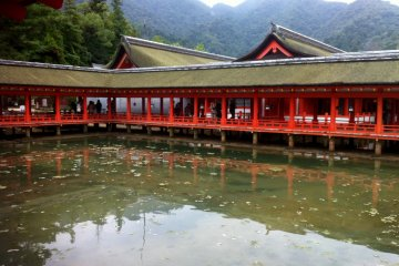 The Beauty of Miyajima Island