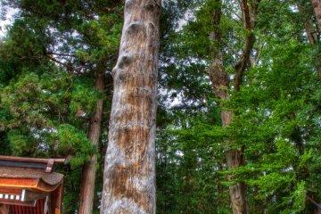 One of the four sacred Onbashira logs at Akimiya