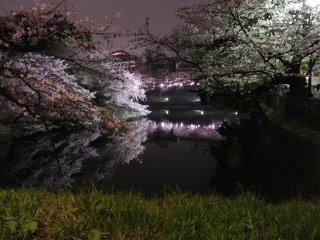 Hình ảnh phản chiếu trên mặt nước yên ả của con hào Chidorigafuchi