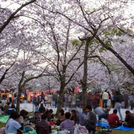 Hanami no Parque Nishi