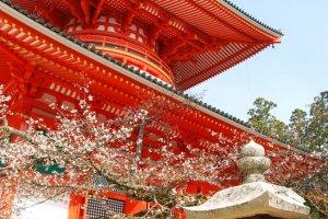 Spring time at Konpon Daito pagoda in the Danjo Garan sacred compound