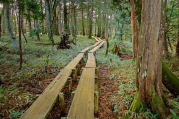 Le Marais de Senjôgahara à Nikkô