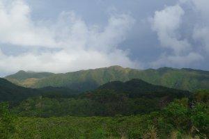 La jungle d'Iriomote
