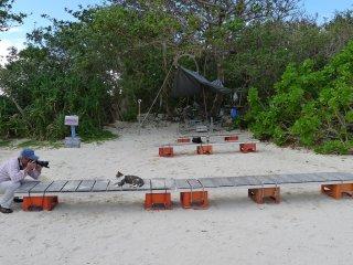 Kabira ou la baie des chats
