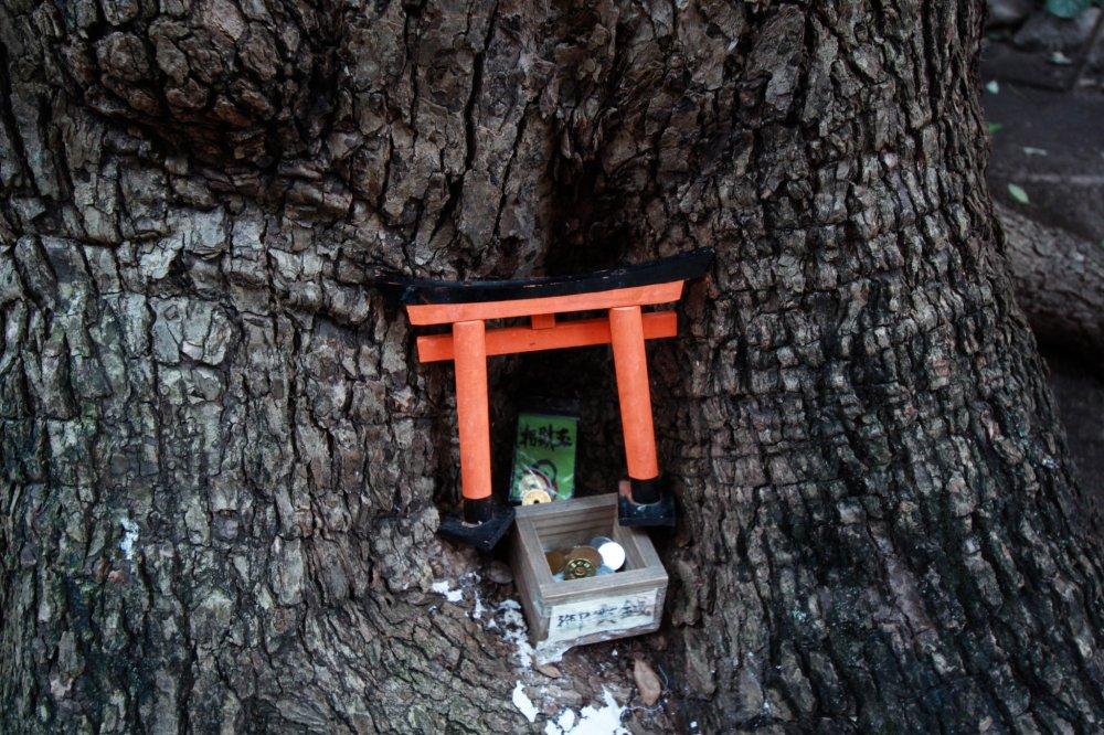 Mini torii gate found under a tree within the shrine