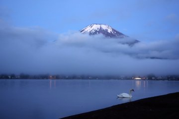A swan mills around the lakeshore as Mt. Fuji covers itself modestly with a few clouds