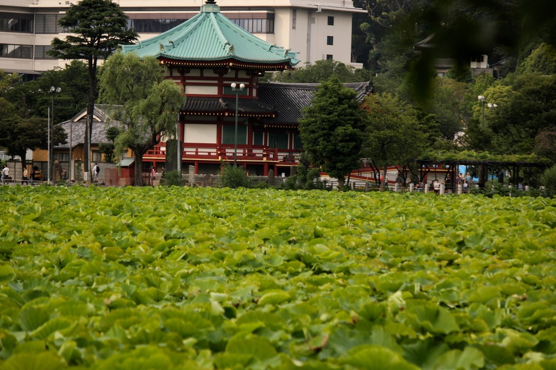 El templo Kaneji.