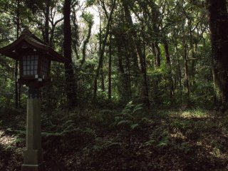 A rich green and peaceful forest within Meiji Jingu
