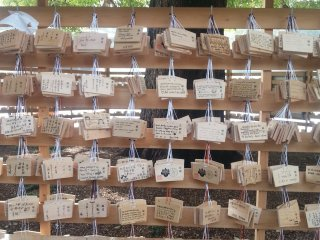 The camphor tree surrounded by ema or tablets with wishes and hopes written on them