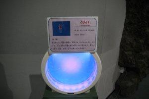 L'aquarium des cliones du Sunpiazza, à Sapporo