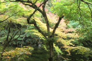 Main garden 5