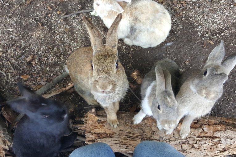 Okunoshima: Pulau Kelinci!