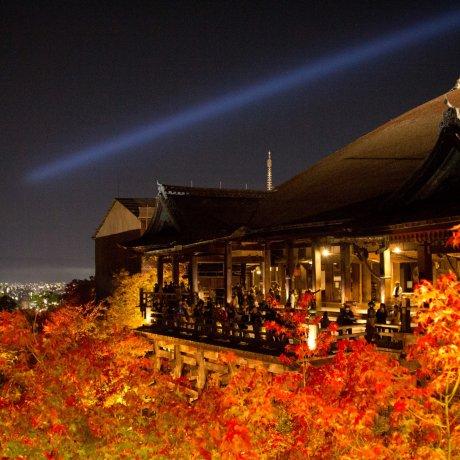 키요미즈데라 가을 전등