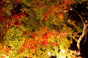 Strolling under lit up autumn leaves is a very peaceful and enjoyable experience