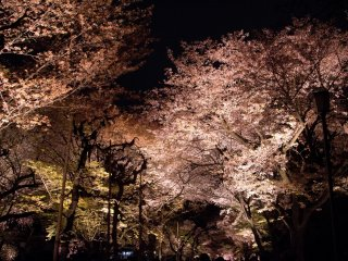 I highly recommend to walk slowly and enjoy the feeling of being under lit up cherry blossoms