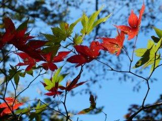 자연은 항상 멋진 색의 조합을 만들어낸다