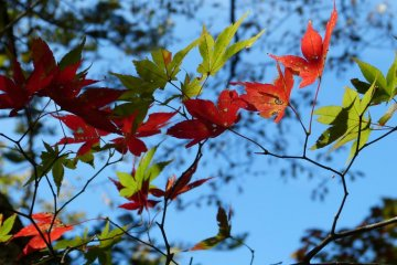自然的色彩总会给你带来意想不到的视觉效果