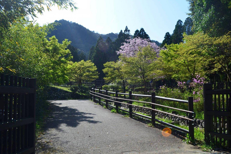 On the way to Otagi Nenbutsuji