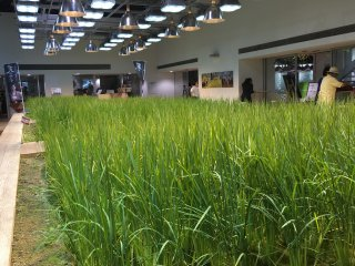 This cafe on the first floor incorporates both seating and a patch of farm for customers to enjoy during their break.