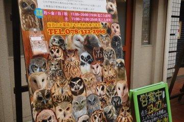 So many owls