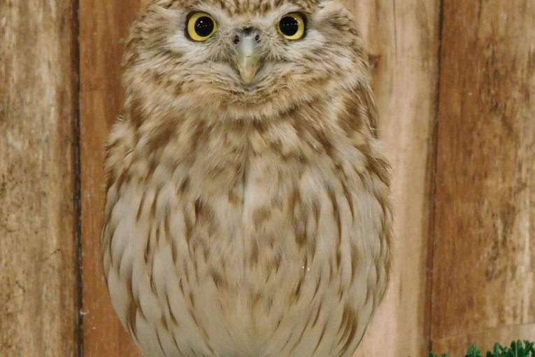 Kobe Owl Cafe