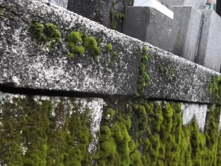 Lichens at the foot of the gravestones