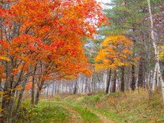 Những tán cây màu đỏ tuyệt đẹp vào mùa thu