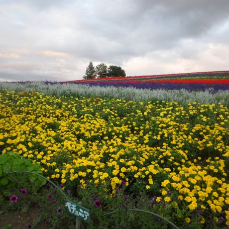 The Flower Fields of Biei