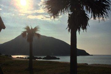 Пальмовые деревья на пляже.