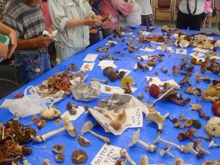 หลังจากอาหารกลางวัน ผู้เชี่ยวชาญในด้านเห็ดจะอธิบายว่าเห็ดชนิดใดกินได้ และเห็ดชนิดใดมีพิษไ
