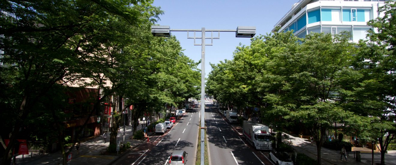 The wonderfully tree-lined Omotesando street