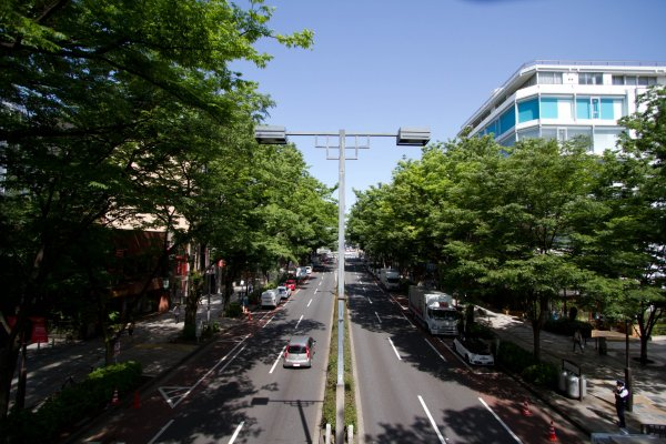 The wonderfully tree-lined Omotesando street