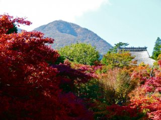 The beauty of autumn colors in Hakone