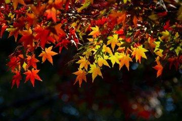 الخريف والألوان في حديقة يويوغي