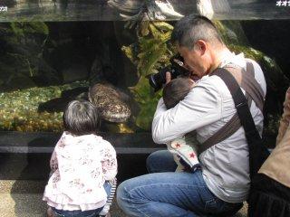 Ayah dengan kedua anaknya mengambil begitu banyak foto ikan
