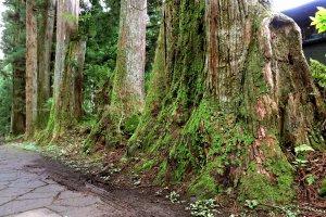 Lots of moss