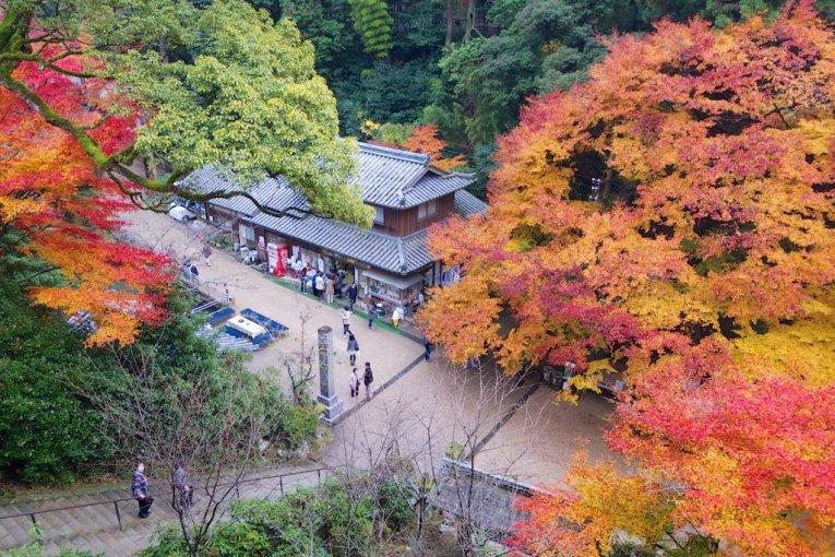 Những chiếc lá rực lửa của Engyo-ji